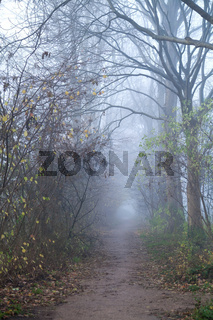 path in forest with fog