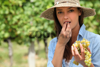 Woman eating bunch of grapes in field