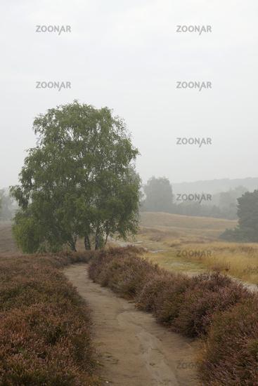 Heathlands in the early morning fog, Westruper Hei