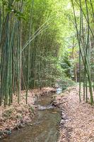 Bamboo botanical garden. Concept for zen, environment and green life.