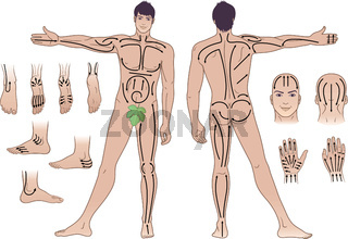 Standing naked man with massaging lines