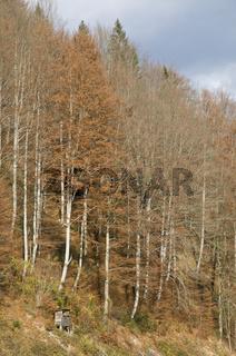 Frühlingslandschaft im Nationalpark Kalkalpen, Oberösterreich, Österreich - spring landscape in the nationalpark lime alps, Upperaustria, Austria