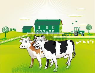 Kühe auf der Weide.jpg
