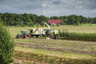Corn harvest vehicles distant view phase 4