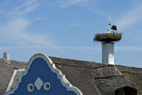 White Stork (Ciconia ciconia) at a stork's nest on a chimney, Apetlon, Seewinkel, Burgenland,Austria