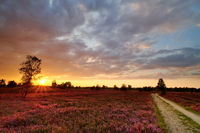 Lüneburg Heath at sunrise