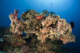 Korallenriff, Fidschi