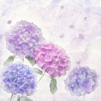 digital painting of hydrangea flowers .