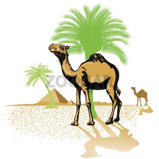 Kamel in der Wüste.jpg