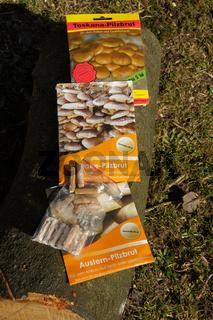 Pilzbrut von verschiedenen Arten