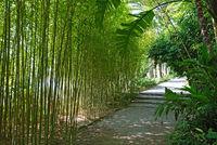 path through bamboo grove in the beautiful garden