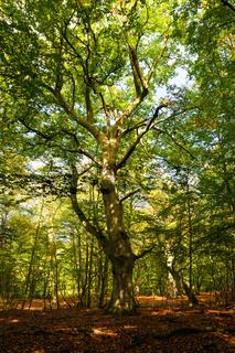 Leuchtender Darsswald