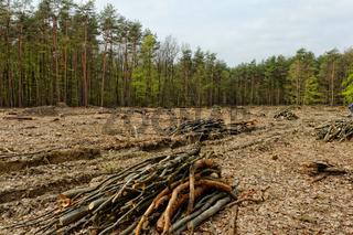 industrial deforestation and logging