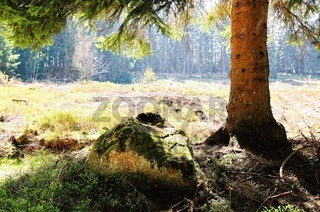 unter dem schattigen alten Fichtenbaum