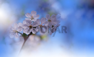 Beautiful Nature Background.Floral Art Design.Abstract Macro Photography.Colorful Flower.Blooming.