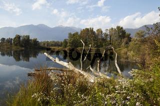 Lago Maggiore - Baum im Naturschutzgebiet