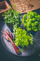 Replanting plants - herbs