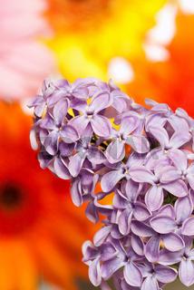 Fliederbusch vor Blumen