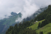Farm house, pine forest and mountain ridge seen from Planalp, Brienz.