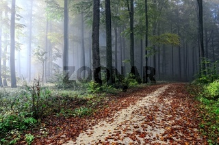 Im Nebel durch den Wald