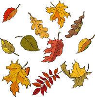 Autumn leaves of trees, seasonal fallen crown. Set