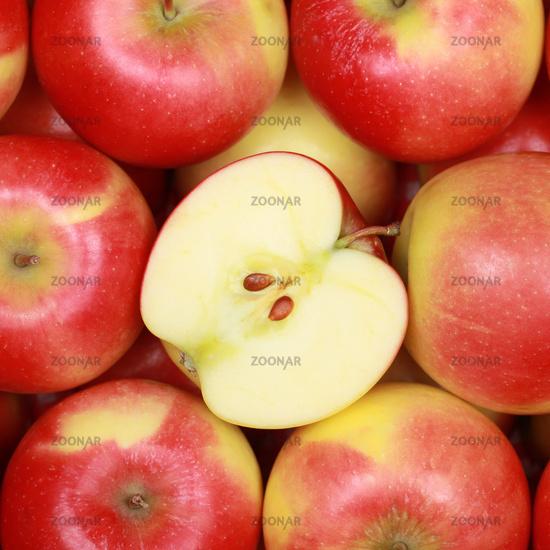 Apfel Früchte