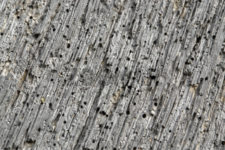 weathered porous wood detail