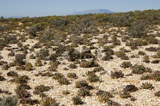Quarzsteinfelder der Knersvlakte mit typischer Sukkulentenvegetation bei Vanrhynsdorp