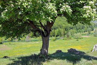 Eselsburger Tal, Schwäbische Alb, Swabian Jura