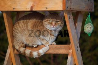 Katze unterm Vogelhäuschen