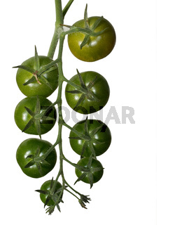 Ripening green tomatoes