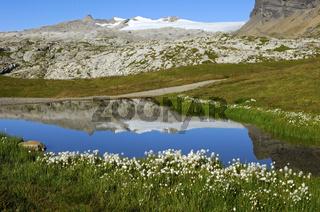 Wollgras an einem Bergsee in den Walliser Alpen