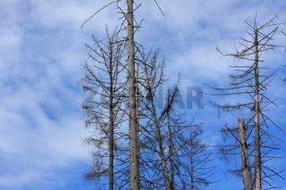 Waldsterben 2012 II
