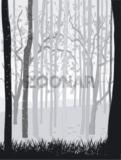 Wald schwarz weiß.jpg