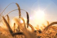 Grain and dryness
