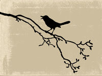 bird silhouette on old paper