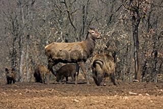 Wild, Parc Animalier, Vinon sur Verdon, Frankreich