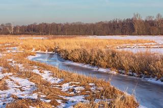 Winterlandschaft mit Wiesen, Röhricht und der gefroreren Alster bei Tangstedt in Schleswig-Holstein