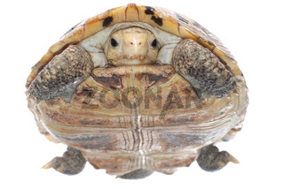 animal turtle tortoise