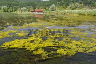 Algenplage im See