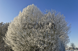 Winter am Niederrhein
