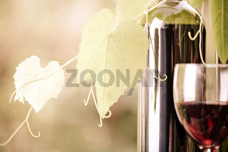 Red wine bottle and vine closeup