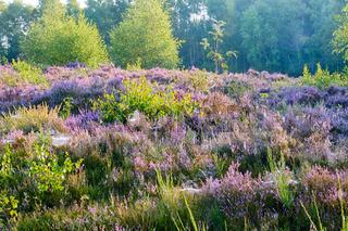 Herbststimmung im Naturschutzgebiet Trupbacher Heide