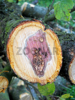 kranker Obstbaum