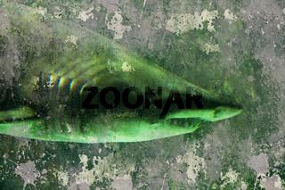 Shark, artistic background textures
