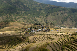 Das Dorf Sopsokha inmitten von Terrassenfeldern für Reis