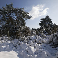 Westruper Heide nature reserve in winter, Haltern am See, Ruhr area, North Rhine-Westphalia, Germany