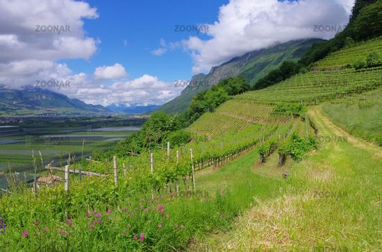 Trentino 06