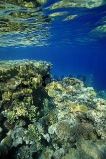 Korallenriff, Coral reef
