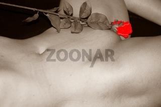 Akt, weiblich, sw m. roter Rose